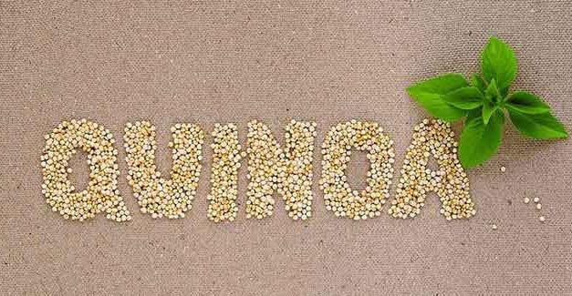 7 razones para consumir la semilla de quinoa